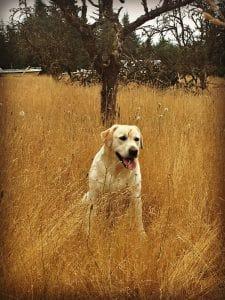 dog sitting in field
