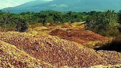 reforestation with orange peels