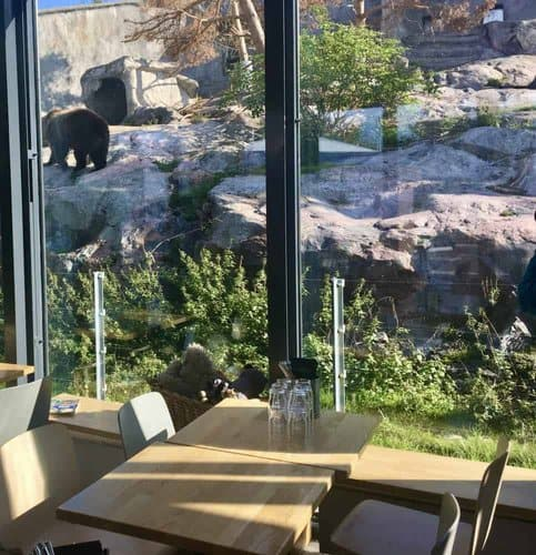 View of the bears from the bear cafe at korkesaari zoo.