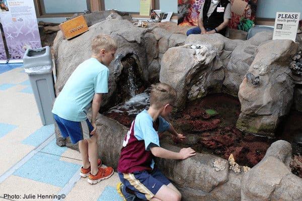 Kids explore touch tanks a the aquarium in newport, oregon