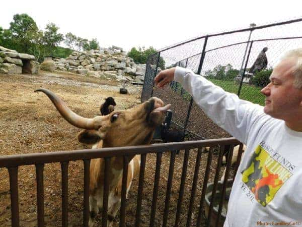 Feeding a cow at nemacolin's zoo