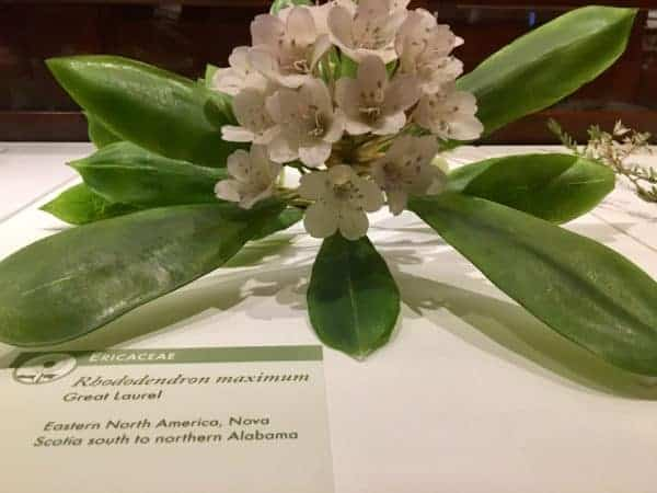 Realistic and scientifically accurate glass flowers at harvard's natural hstory museum.