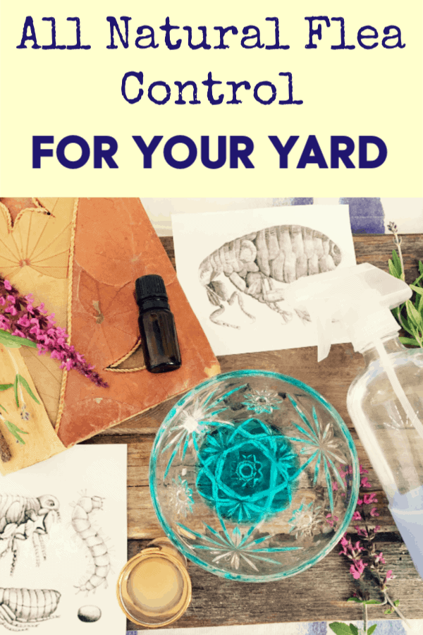 how to kill fleas in your yard