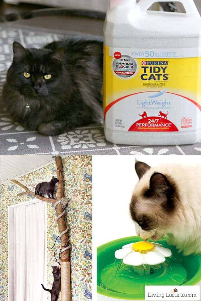 Fun DIY cat toys, kitty litter ideas and other amazing ideas to spoil your cat!