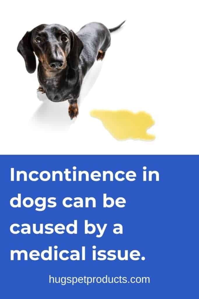 Incontinence in dogs can be health related
