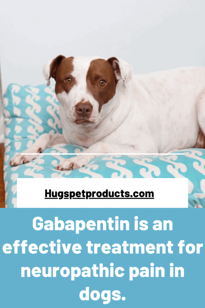 Gabapentin for Dogs Cheat Sheet for Dog Owners