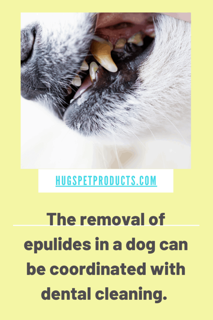 Epulides in dogs are lumps with no known cause.