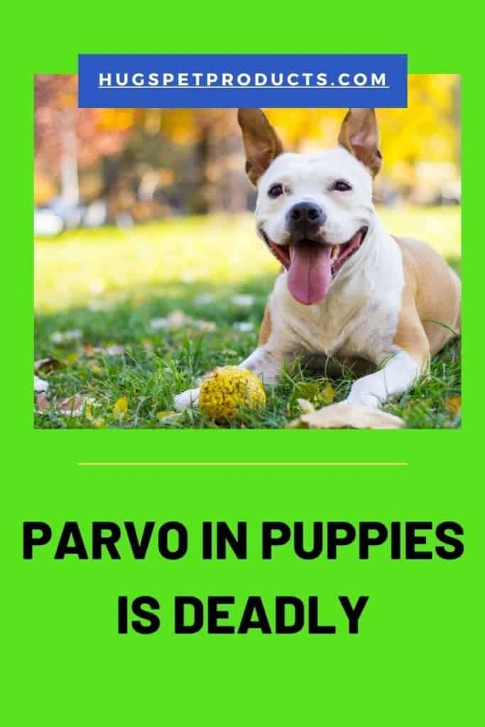 Parvo in puppies is deadly