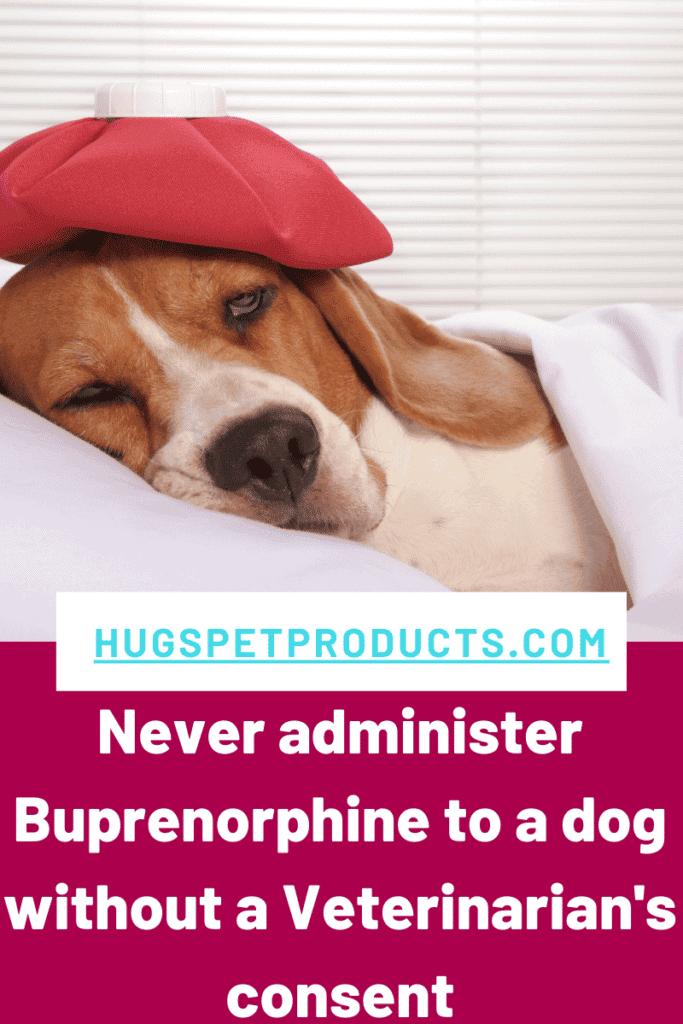 Never administer Buprenorphine with Veterinarian Guidance