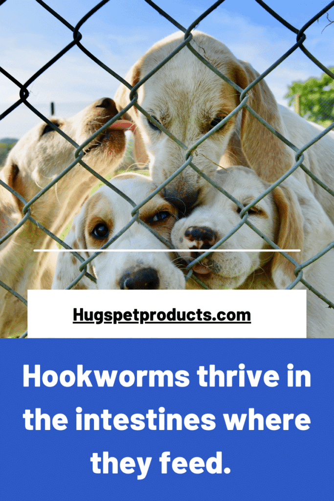 hookworms in dogs thrive in feces