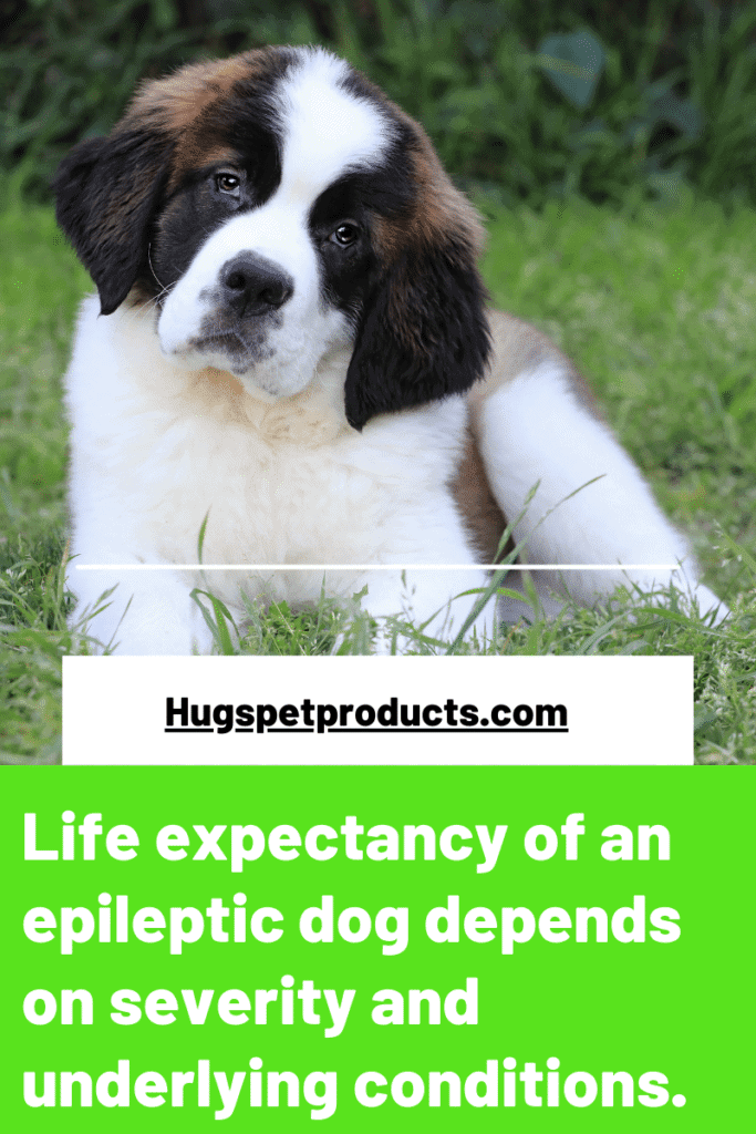 The life expectancy of a dog with seizures varies
