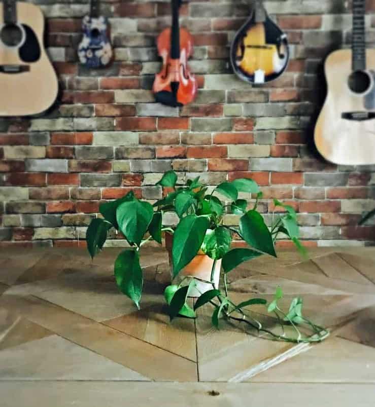 repot houseplants