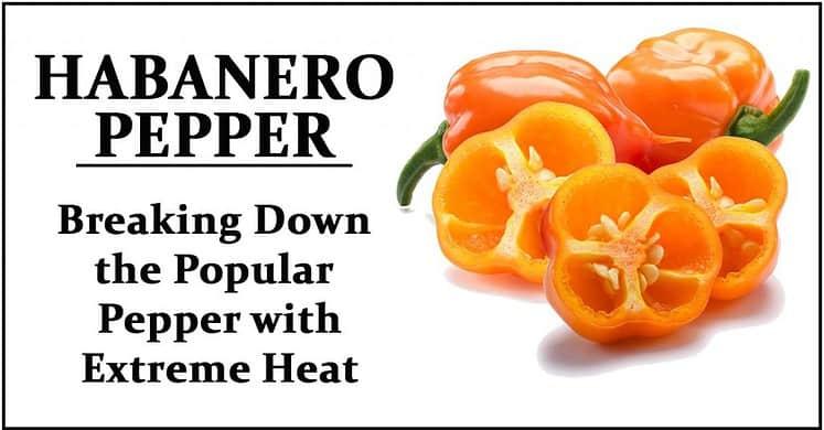 Habanero Pepper Wiki