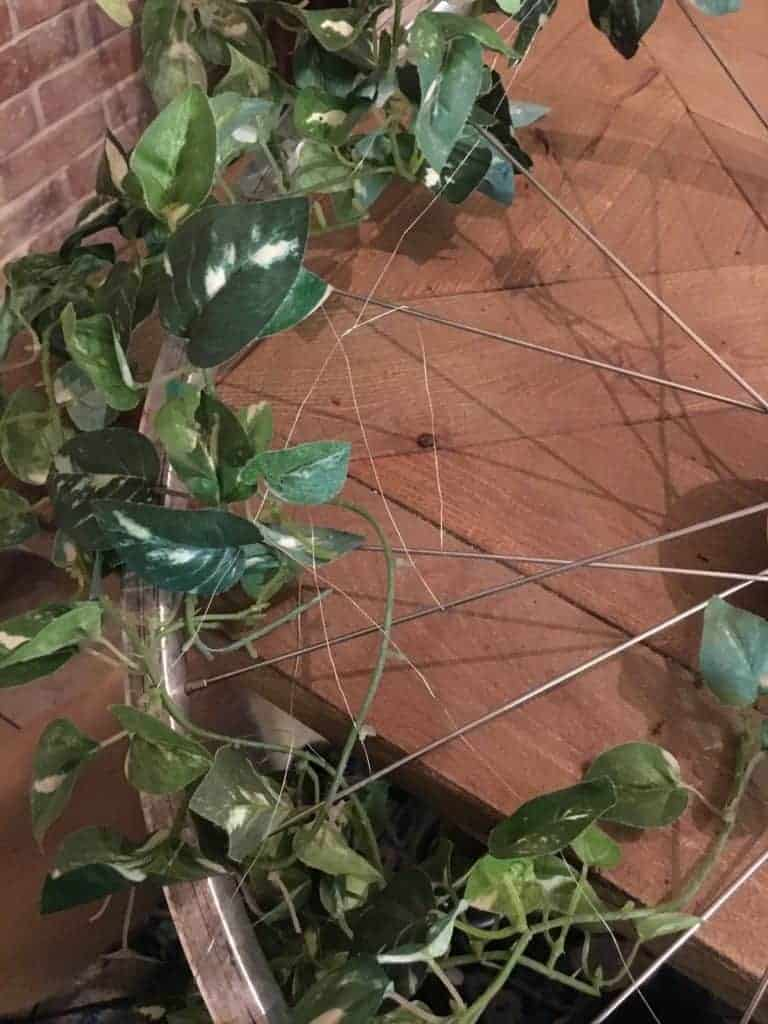 Bicycle Wheel Wreath floral wire wrapped around spokes with ivy vines