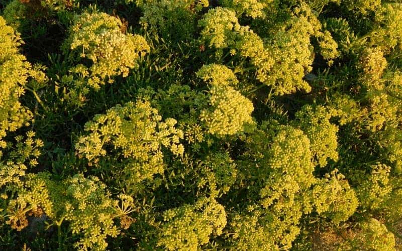Outdoor Plants That Grow Without Sunlight