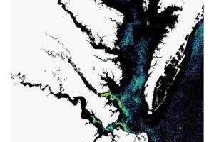 Massive, Glowing Algal Blooms Overtake Va. Waters