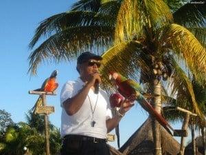 The parrot show at grand bahia principe