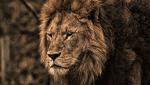 """商標登録insideNews: Disney's trademark of Swahili phrase """"Hakuna Matata"""" sparks debate on cultural copyright"""