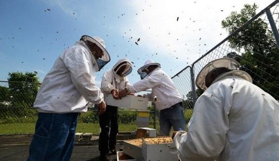Beekeeping Association Helping New Beekeepers Get Started