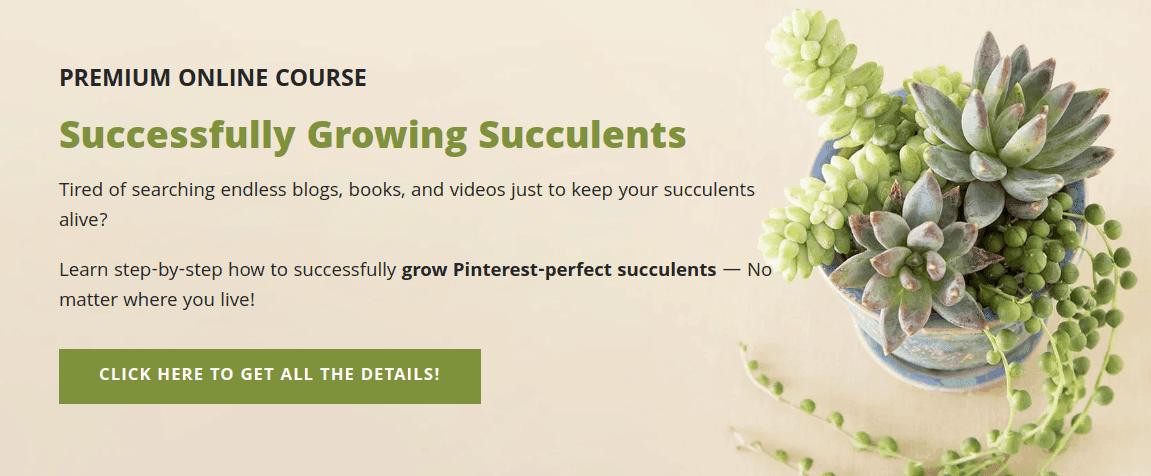 Esempio di corso online per piante grasse e sole