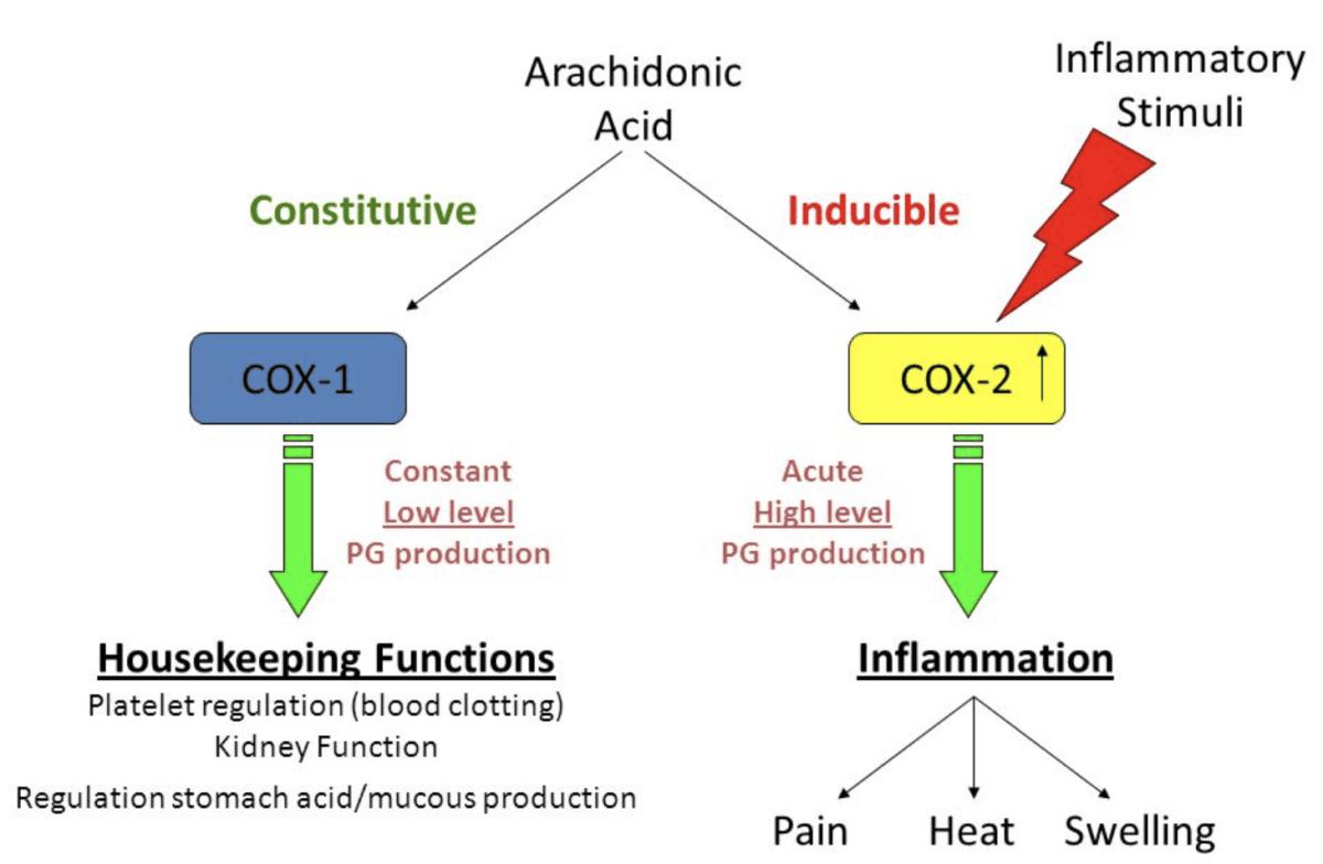 COX-1 and COX-2