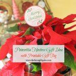 Poinsettia Care And Hostess Gift Idea