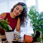 Easy Care Houseplants for Beginners