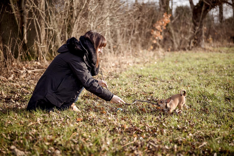 Frauchen spielt draußen mit dem kleinen Chihuahua