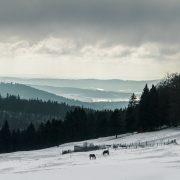 Winteridyll im Thüringer Wald