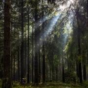 Sonnenstrahlen brechen durch den Thüringer Wald in der Nähe von Schmiedefeld am Rennsteig Canon EOSR6 & EF 35mm f/1.4l ii usm