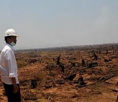 Jokowi tinjau lokasi pemadaman