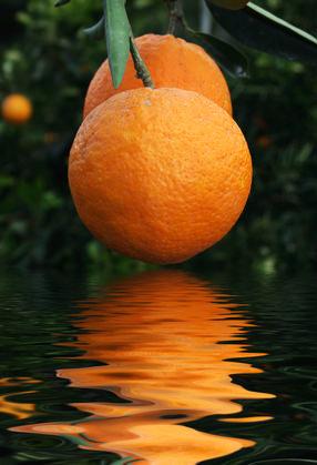 Fuente de vitamina C