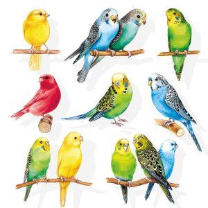 ambiente servetten birdies fsc mix