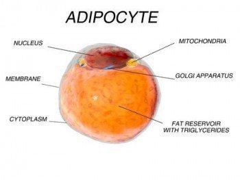 Adiposity, Adipokines, and Adiposopathy - Sick Fat Disease Explained