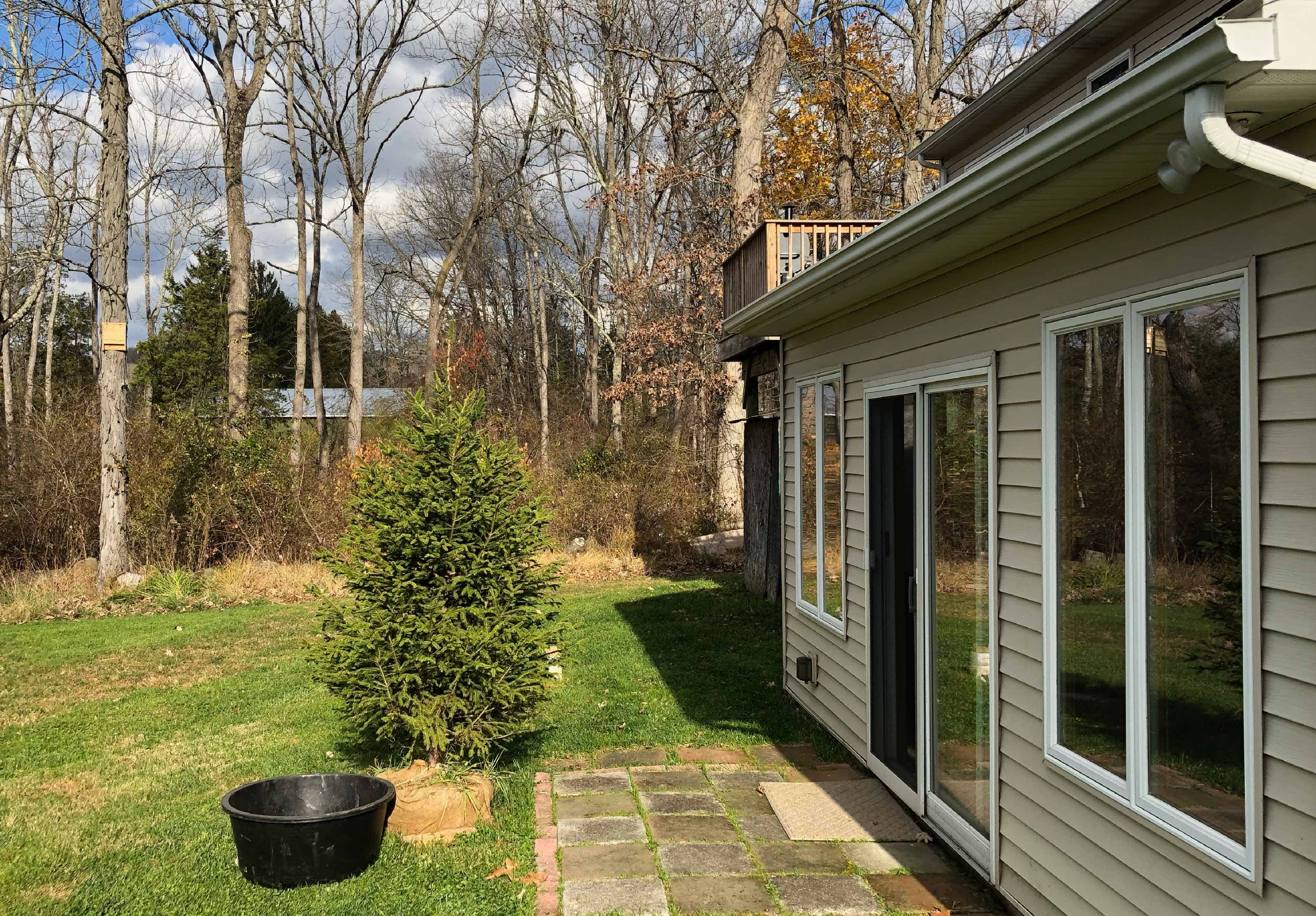 Plant  your root ball Christmas tree outside after the holidays have passed.