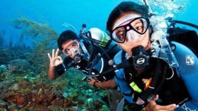 Two scuba divers scuba diving