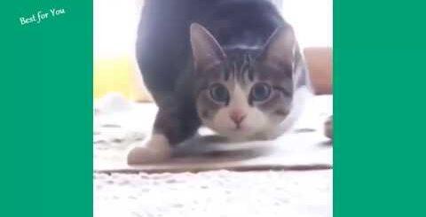 Приколы над кошками#18   Видео приколы про котов