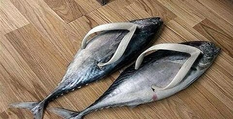 Супер приколы на рыбалке 2016!
