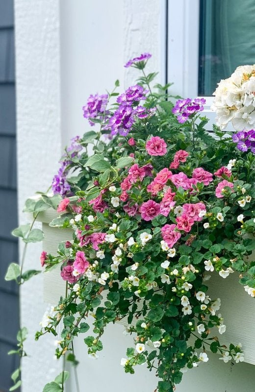 white pink and purple flower boxes
