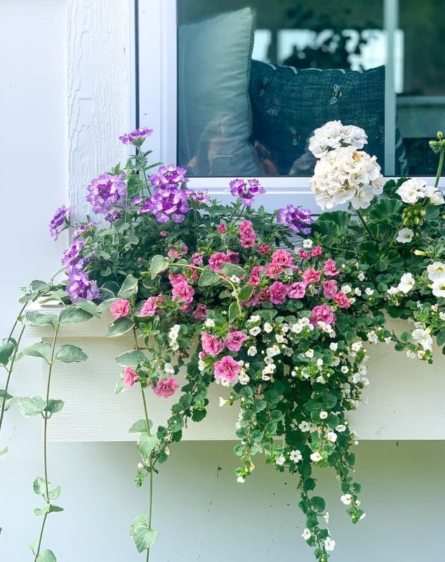 best flower for sunny window boxes
