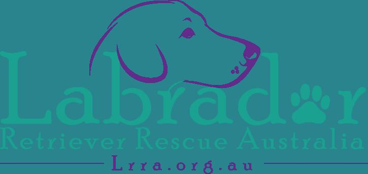 Labrador Retriever Rescue Australia