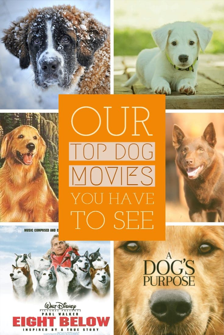 6 Most Incredible Dog Movies Of All Time 2019 - Our Personal