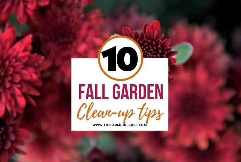 10 Fall Garden Clean-Up Tips