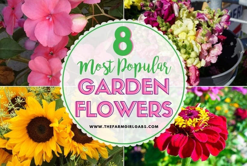 8 Popular Flowers for Your Flower Garden