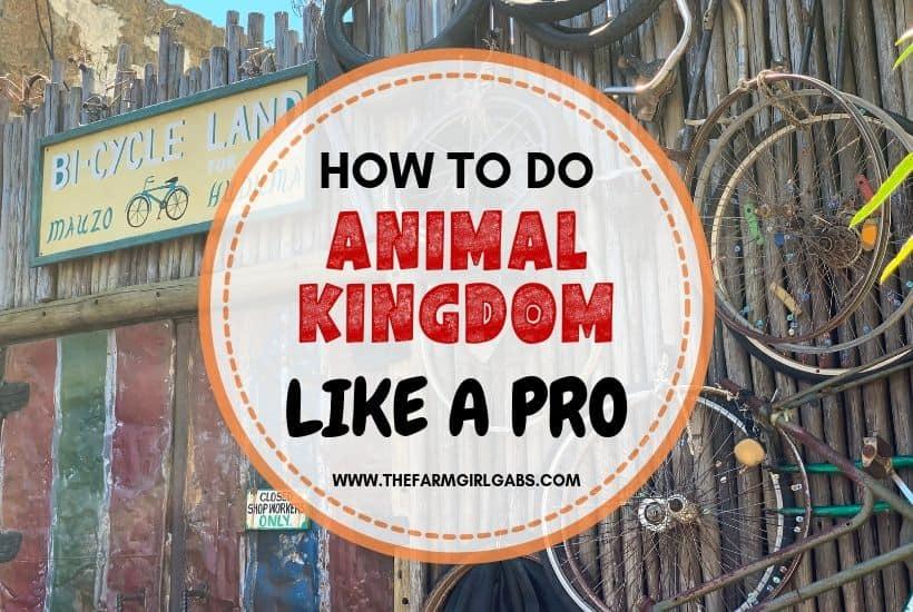 Animal Kingdom Pro Tips: Plan the Park Like an Expert