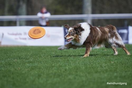 Frisbee Dog 10