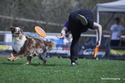 Frisbee Dog 11