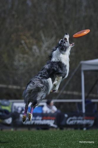 Frisbee Dog 18