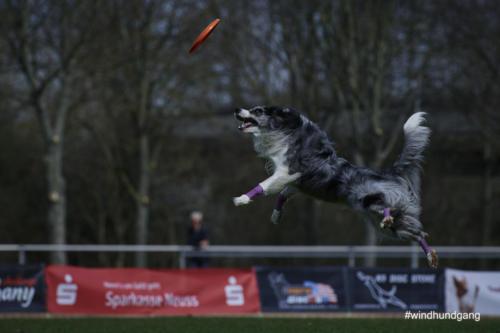 Frisbee Dog 19