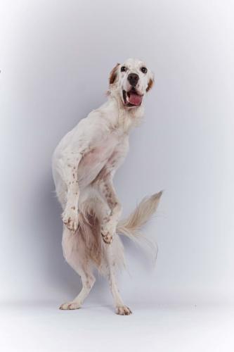 Hundefoto Koeln1